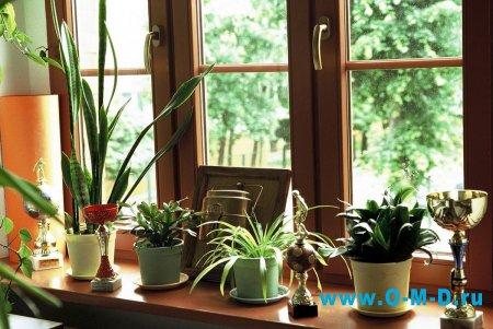 Что лучше пластиковые окна или деревянные?